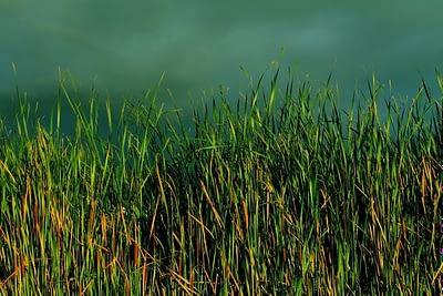 grass-1283557_1920
