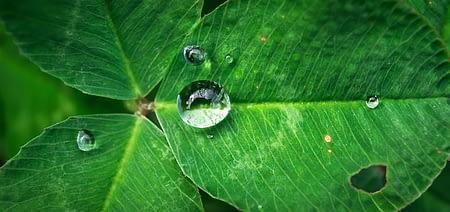 leaf-1822969_640